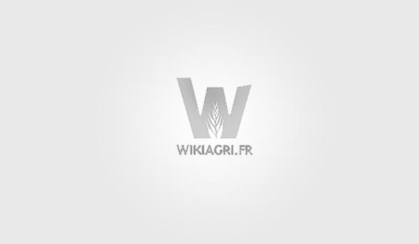 Wikiagri logo/ panique dans l'assiette